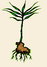 image root with plant